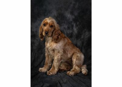 Pet-Portraiture-01-TL-WEB-1200x800-72px