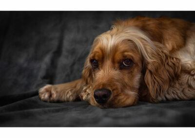 Pet-Portraiture-02-TL-WEB-1200x800-72px