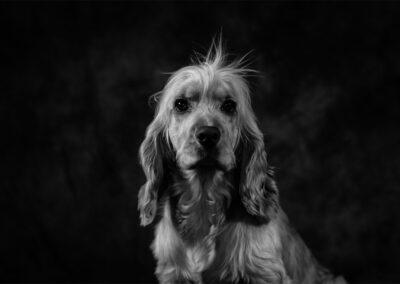 Pet-Portraiture-03-TL-WEB-1200x800-72px
