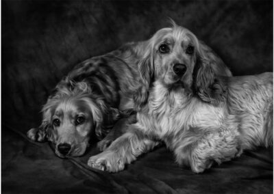 Pet-Portraiture-04-TL-WEB-1200x800-72px