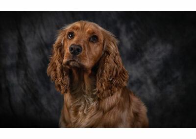Pet-Portraiture-06-TL-WEB-1200x800-72px