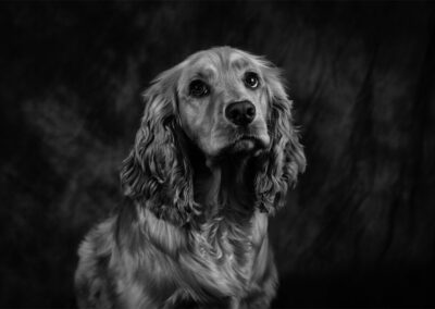 Pet-Portraiture-07-TL-WEB-1200x800-72px