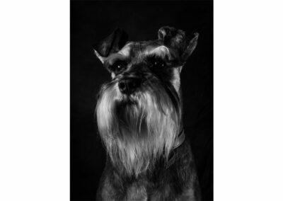 Pet-Portraiture-10-TL-WEB-1200x800-72px