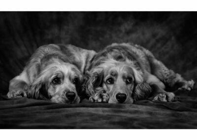 Pet-Portraiture-13-TL-WEB-1200x800-72px