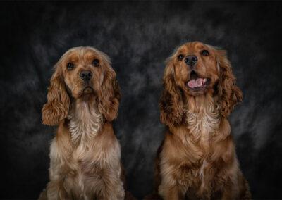 Pet-Portraiture-14-TL-WEB-1200x800-72px