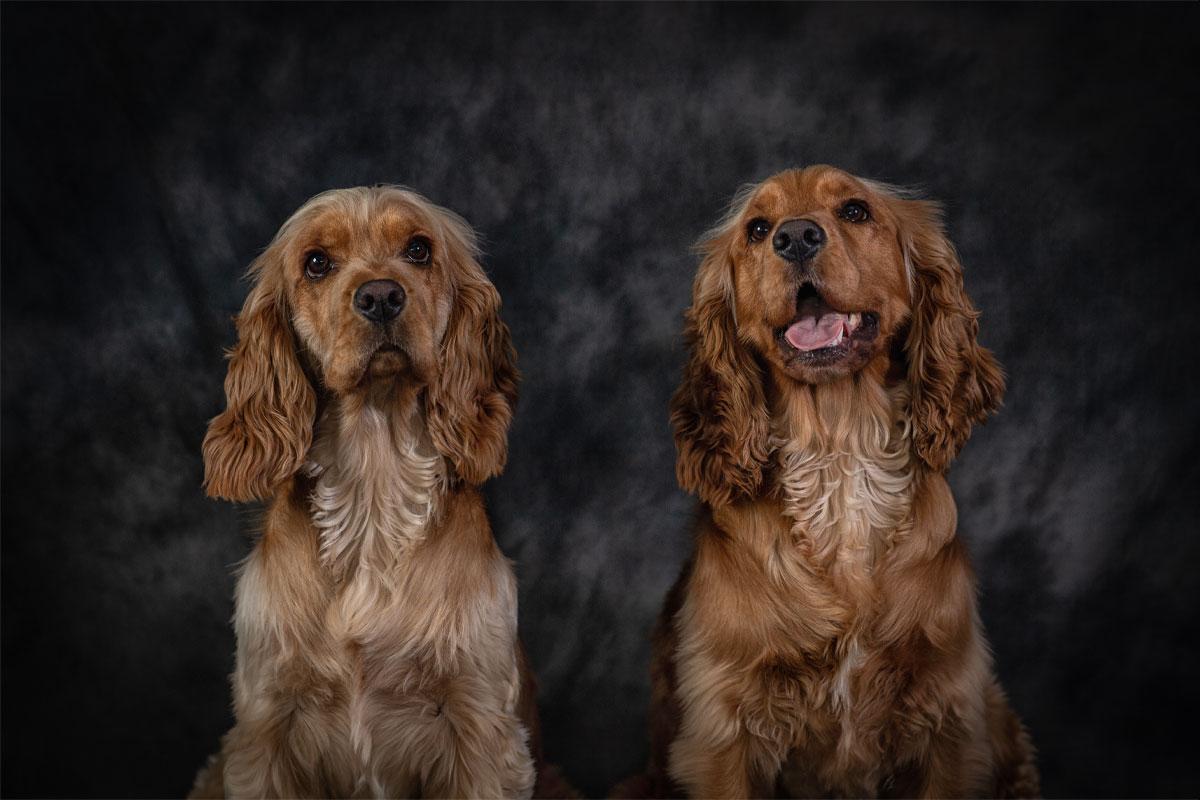 Pet Portrait by Trevor Lucy Photography