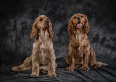 Pet-Portraiture-15-TL-WEB-1200x800-72px