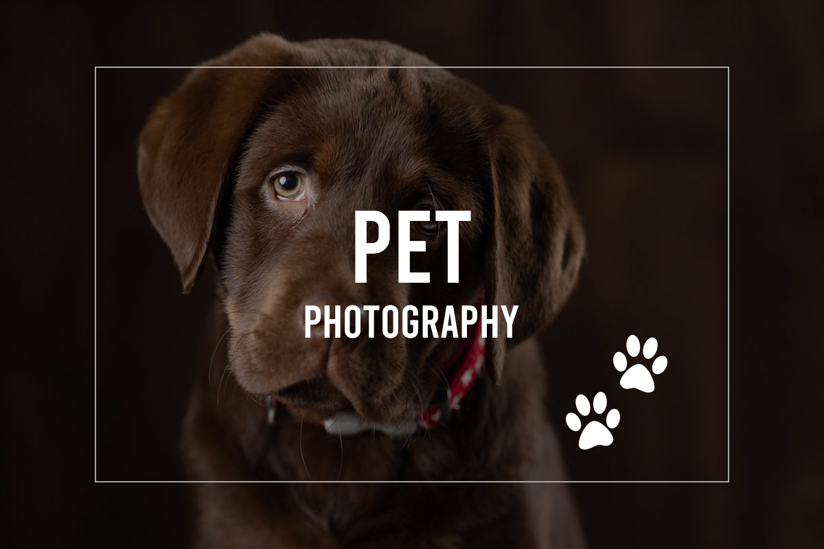 Pet Portrait by Trevor Lucy Photography