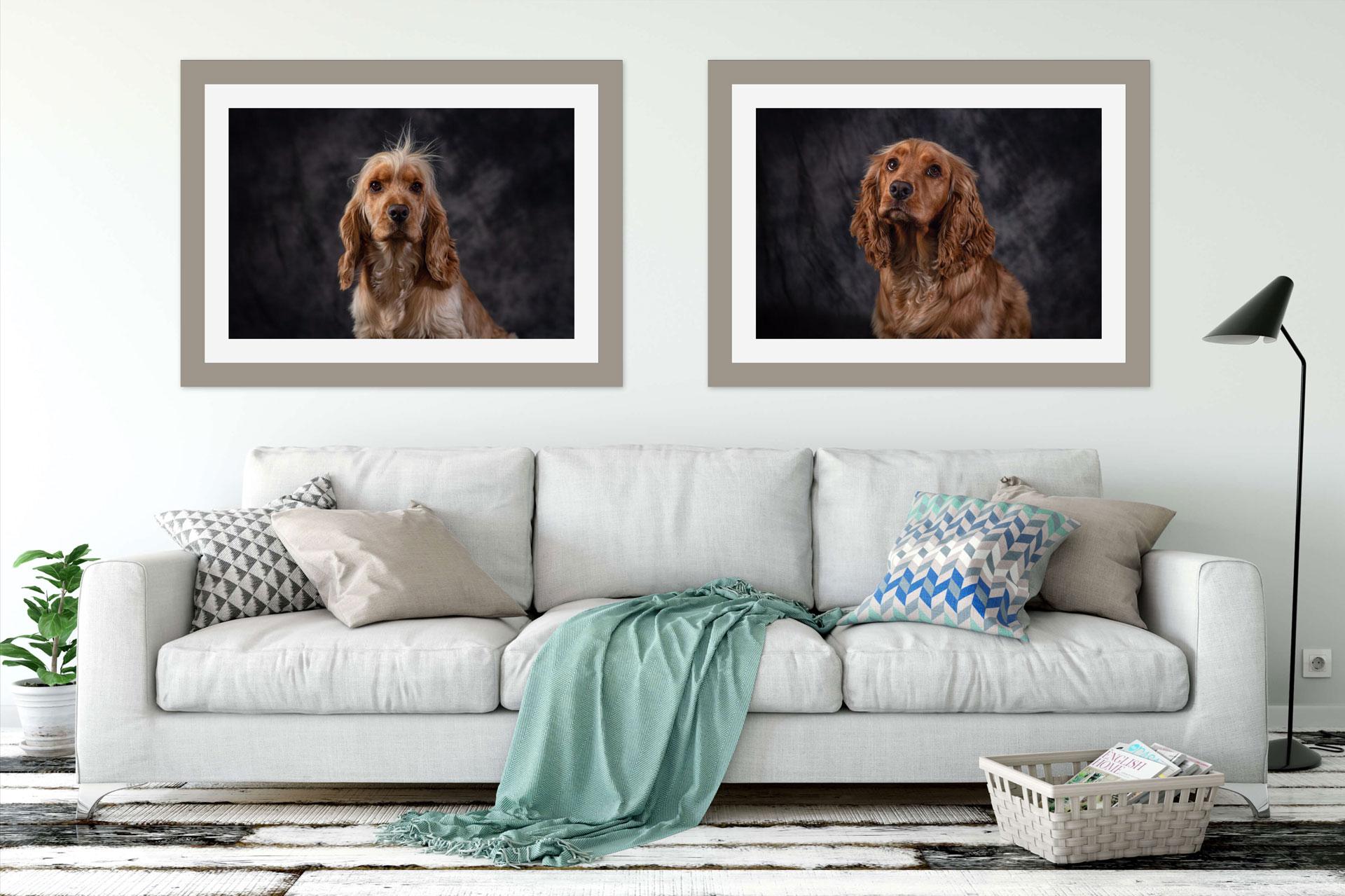 Pet Photographer Enniskillen